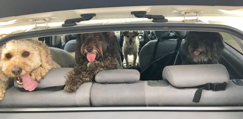car travel safety tips for dogs