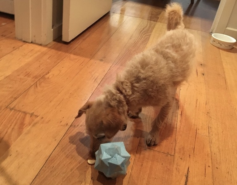 Benefits of interactive & puzzle toys for your dog