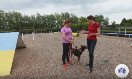 How dog agility can benefit you and your dog