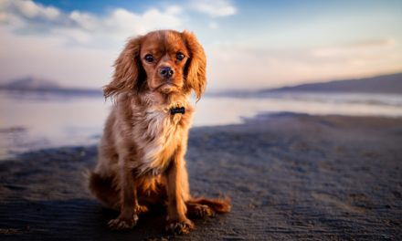 Grooming tips for dogs of all breeds